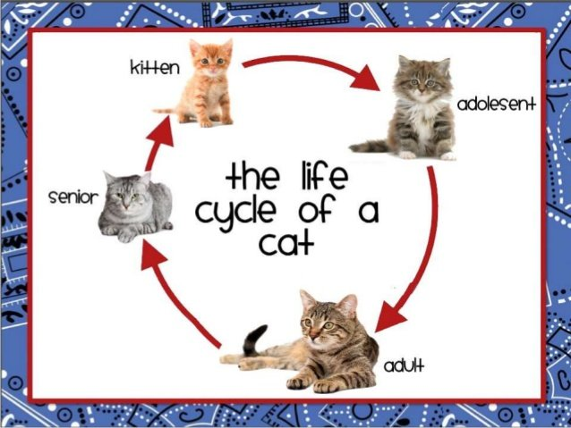 chicken-and-cat-life-cycle-for-upload-2-638_ORIGINAL.jpg